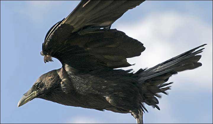 Raven Flight Nude Photos 6